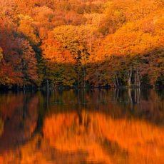 紅葉と蔦沼の日の出