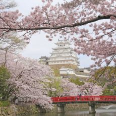 Himeji-Castle-With-Cherry-Blossom