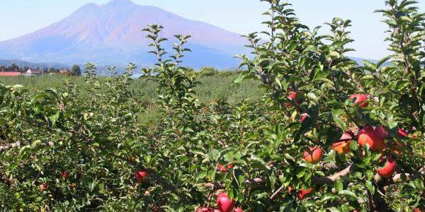 Hirosaki-Apple-Park-And-Mt.-Iwaki-Hirosaki-Aomori-Japan