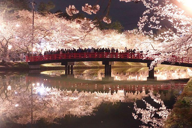 Hirosaki Park Cherry Blossom Festival Aomori Japan