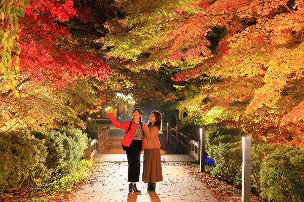 Hirosaki-Park-Chrysanthemum-And-Autumn-Foliage-Festival-Aomori-Japan