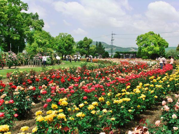 RSK Rose Garden Okayama Japan