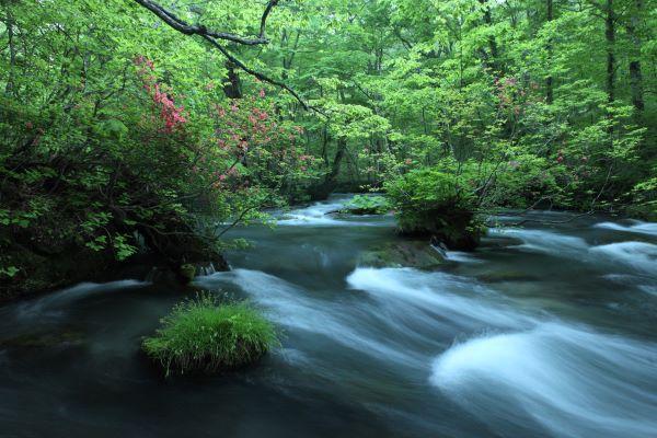 Samidare No Nagare Oirase Gorge Aomori Japan