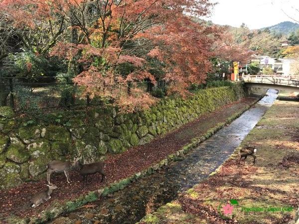 Momijidani River Miyajima Japan