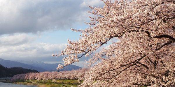 Hinokinaigawa-Tsutsumi-Park-Kakunodate-Akita-Japan-