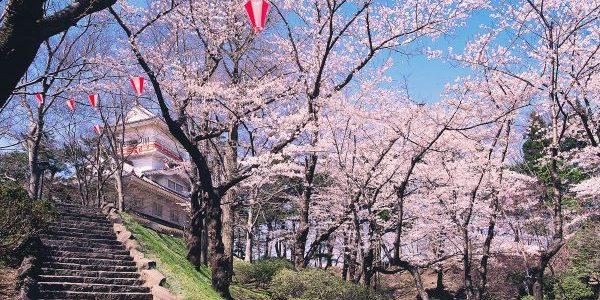 Senshu-Park-Cherry-Blossom-Festival-Akita-Japan