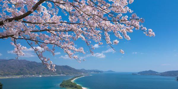 Amanohashidate-View-Land-Cherry-Blossom-Miyazu-Kyoto